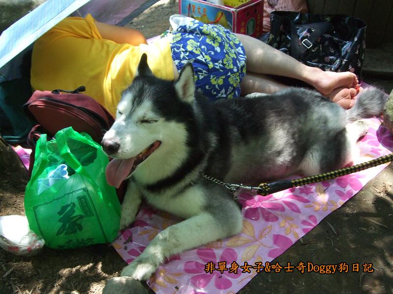 Doggy三芝八連溪10