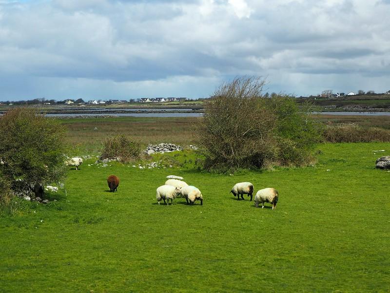 westirelandP4160955, west ireland, irlanti, läni-irlanti, luonto, nature,
