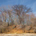 Bare Trees by Darryl Robertson