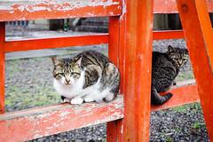 Today's Cat@2016-04-04