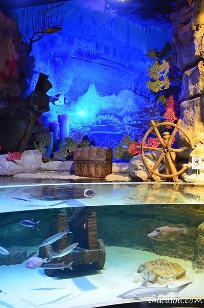 Dubai Aquarium (7)
