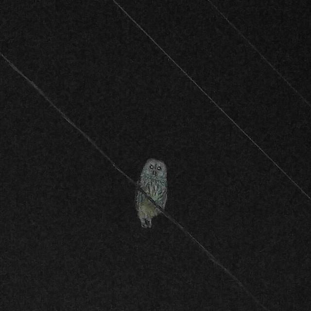 Owl pal.