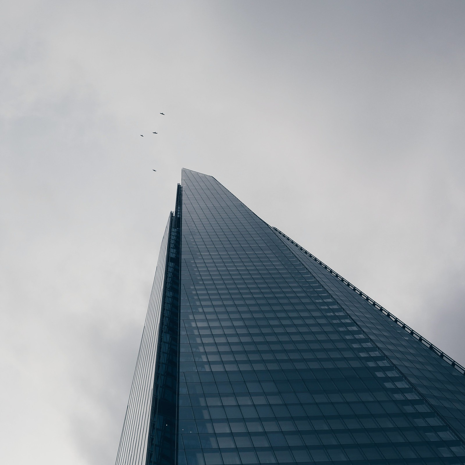 birds and the Shard