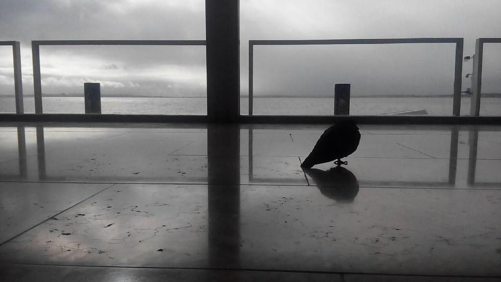 #solitude #zen #pigeon