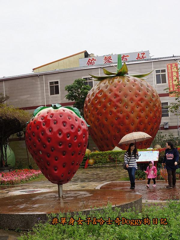 苗栗草莓大湖酒莊清安洗水坑豆腐街06