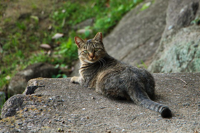 Cats of Japan