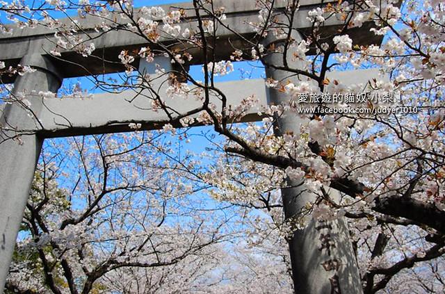 櫻花 -1