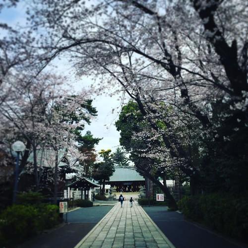 新年度のご挨拶 桜はまだ七分咲き