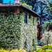 House in Bloom - Tuscany, Italy by mikederrico69