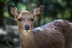Gimme a deer cracker!