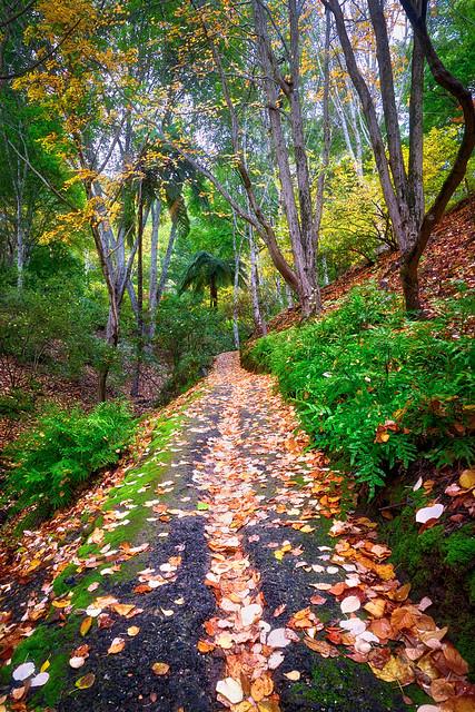 Autumn through the ferns.jpg