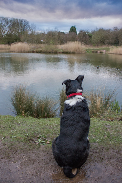 Dylan looking at a pond