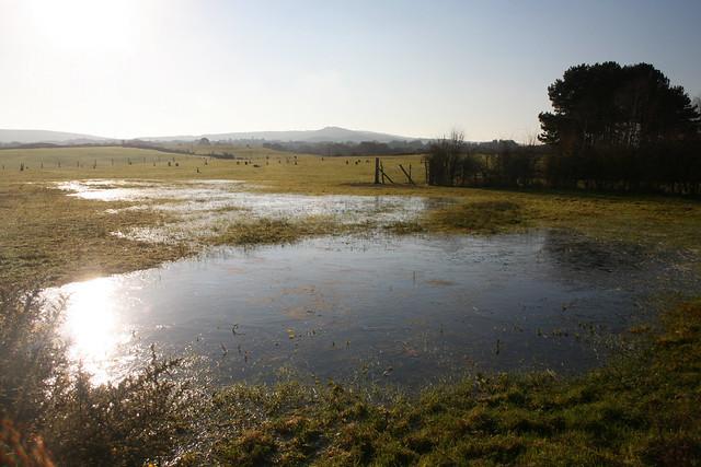 Middlebere Heath