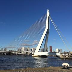 #010 #Rotterdam #ErasmusBridge #WhiteSwan