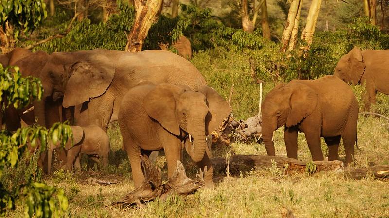 Zanzibar safari