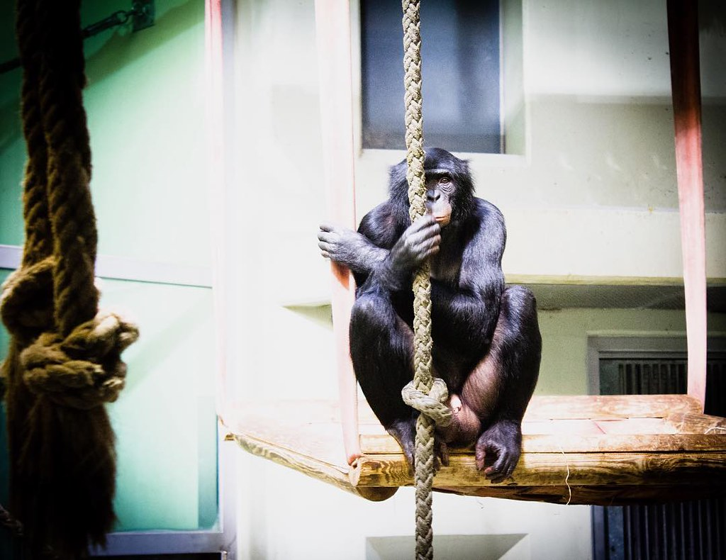 Berlin#zoo#monkey#sguardi...