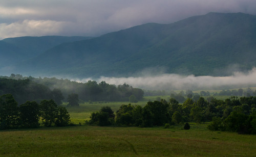 Misty Morning Trail at Cades Cove, Great Smoky Mountains NP