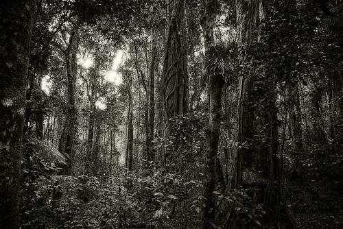 forest landscape rainforest nikond800 gondwanarainforestofaustralia lamingtonnatiionalpark