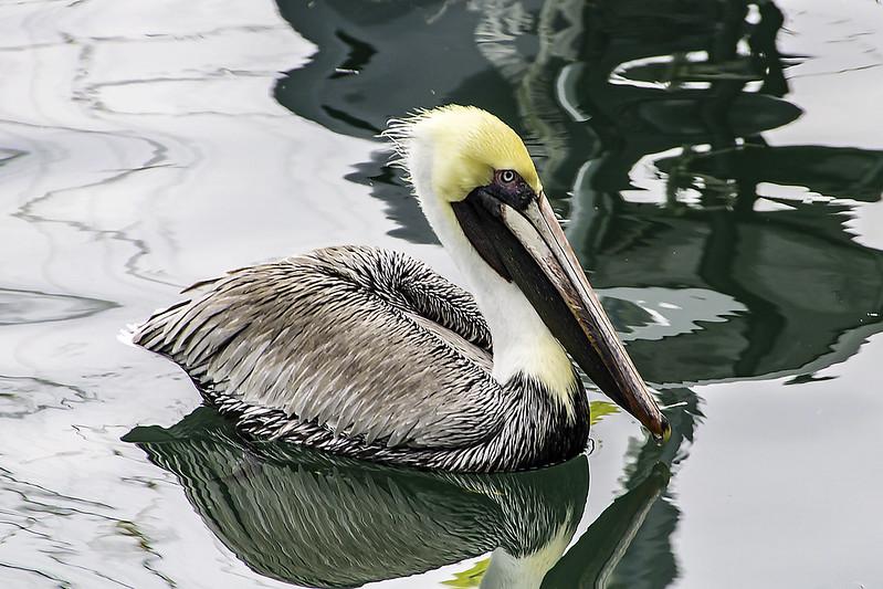 Fotos de animales de todo tipo incluyendo mascotas que más te gustan - Página 4 25667697646_05254f45fa_c