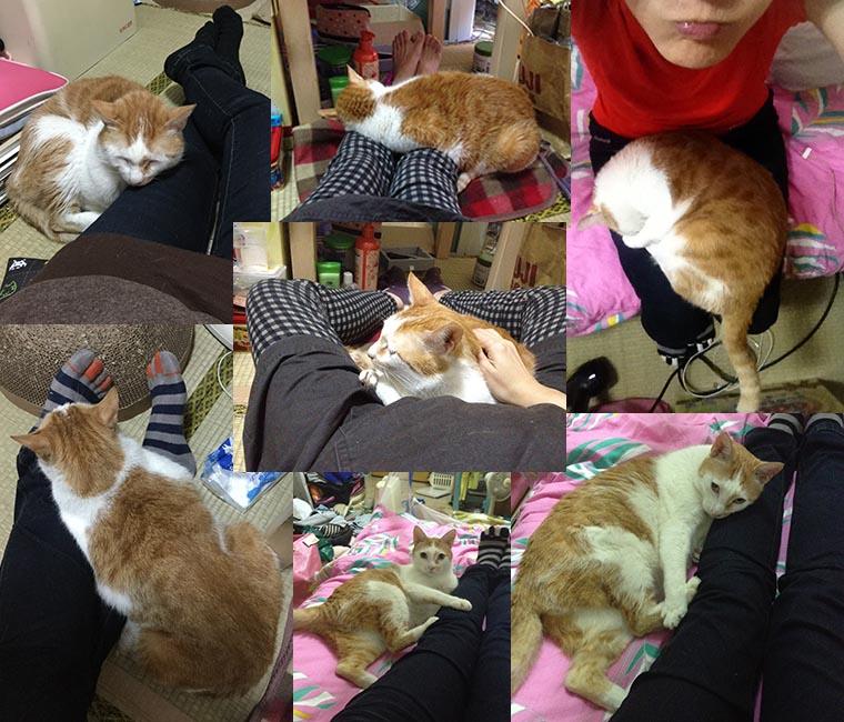 家裡來了一隻貓 不要跟貓咪一起睡