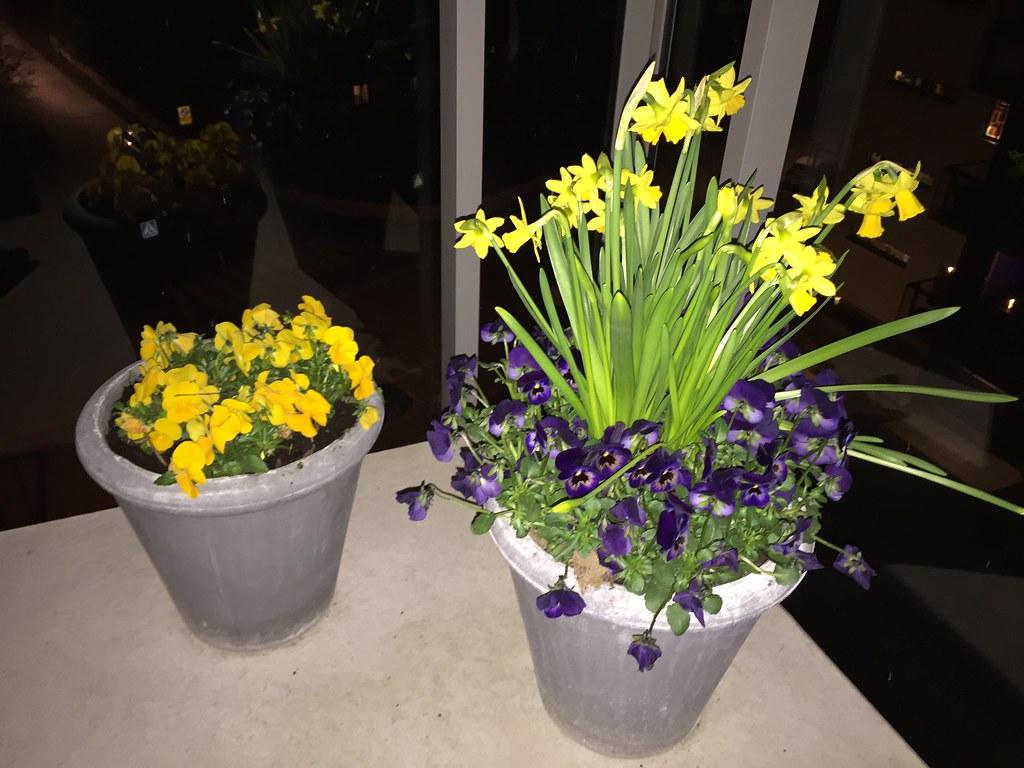 Blommor på balkongen
