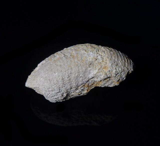 Ammonite fragment