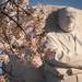 traditional MLK cherry blossom shot by wolfkann