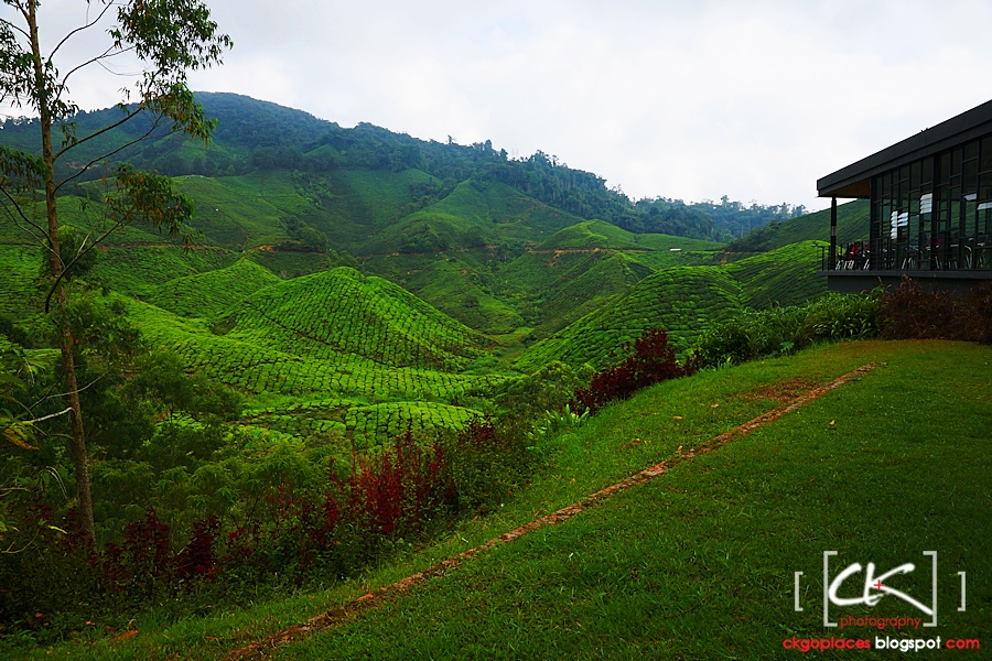 Cameron_Highlands_014