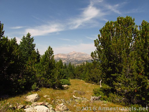Views through the trees at the western end of Stough Creek Pass, Wind River Range, Wyoming