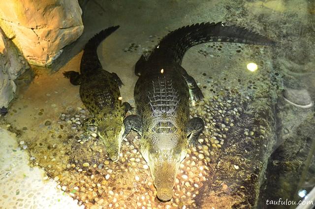 Dubai Aquarium (8)