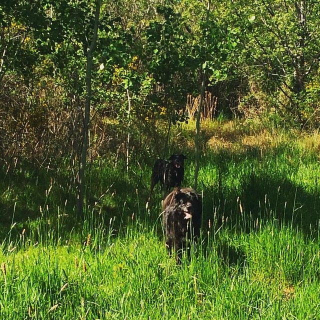 Maggie and Bear Cub blending in with nature. 🌿