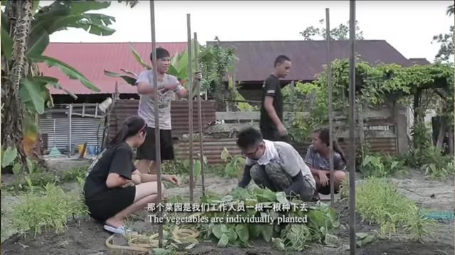 LLTA Vegetable Plot