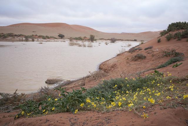 Sossus Vlei  Namib-Naukluft Park - Namibia