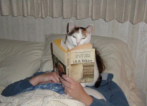 imagen graciosa de animales gato lector