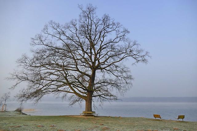 Seine Majestät...der Baum