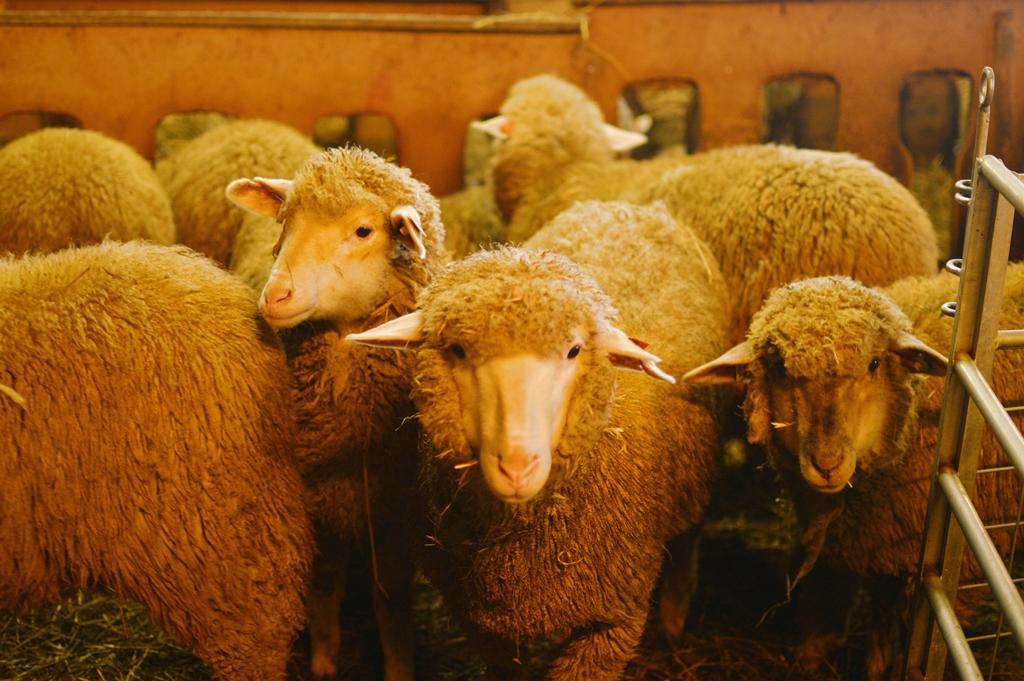 lammas9