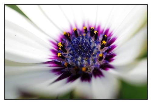 Coeur de fleur 2