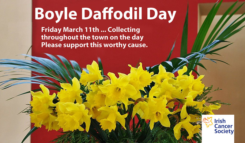 Daffodil2016