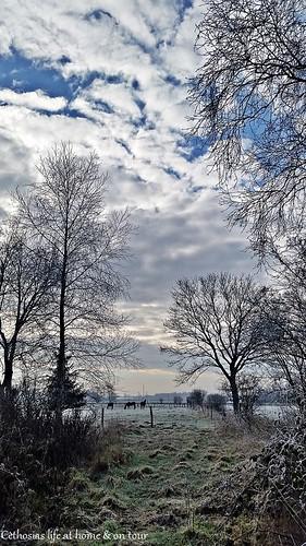 Stadtwald am 28.02.2016 bb