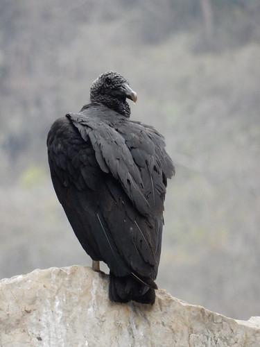 El Aguacero - mean bird