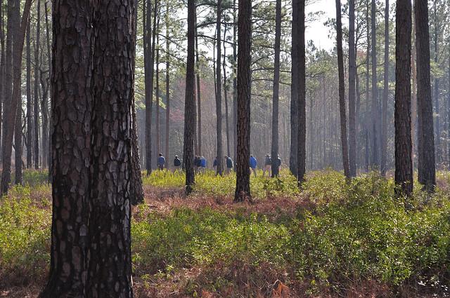 Zuni Pine Barrens (10)