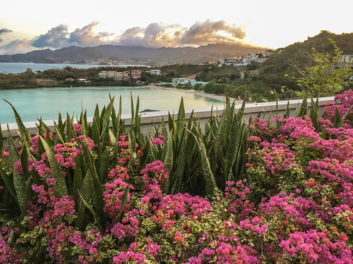 beach sunrise bougainvillea grenada caribbean saintgeorge thelime borganvillia mornerougebay