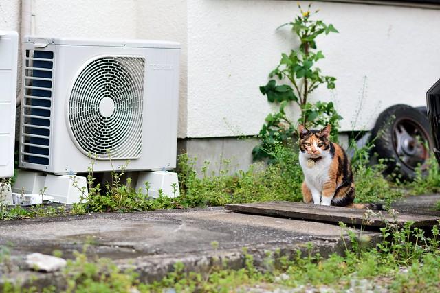 駐車場にたたずむネコの写真