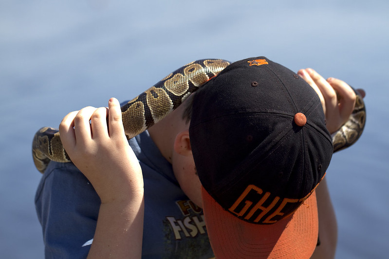 ball python3