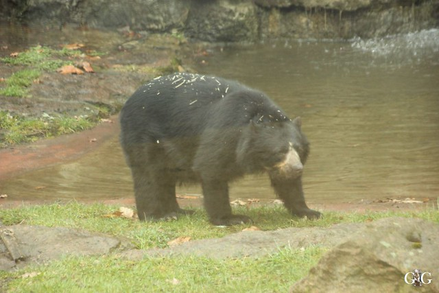 Nieselregen im Tierpark Friedrichsfelde 25.03.201618