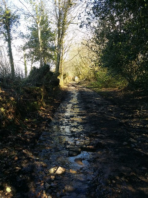 Lane to Lettaford
