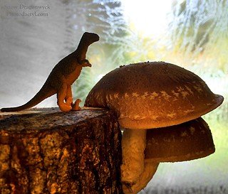 20160403 - Regi Visits the Forest of Night Blooming Mushrooms