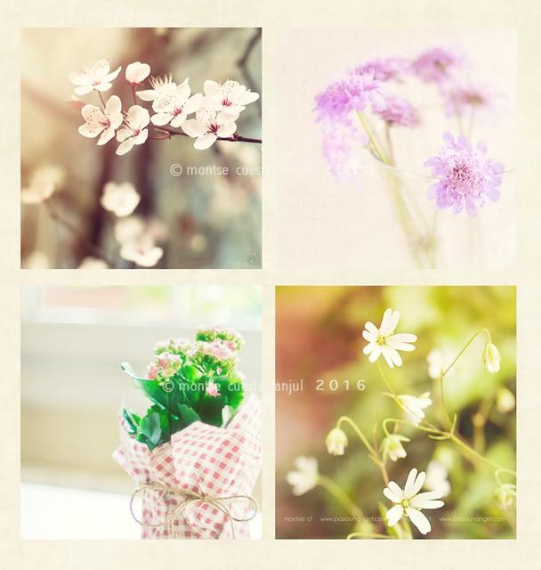 collge de flores silvestres+