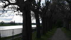 20160416_181818_Käthe-Kollwitz-Ufer_A