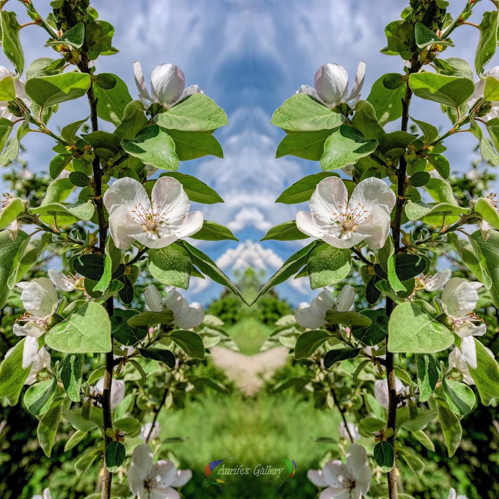 Flowering (Art-Collage)